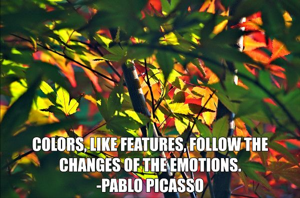 Colors, like features, follow the changes of the emotions. -Pablo Picasso